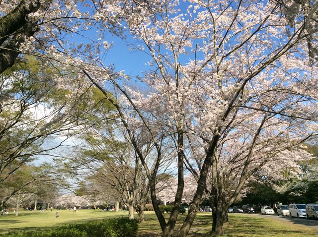 千葉平和公園(公営墓地)1