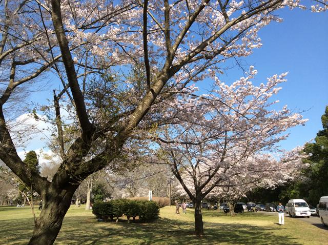 千葉平和公園(公営墓地)3