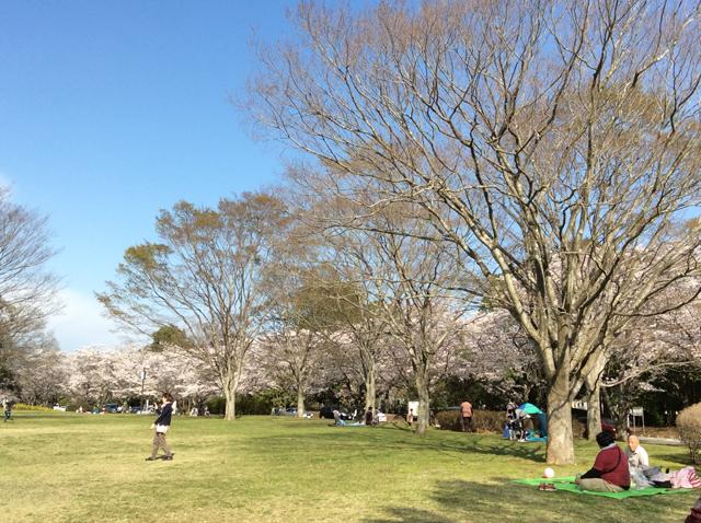 千葉平和公園(公営墓地)4