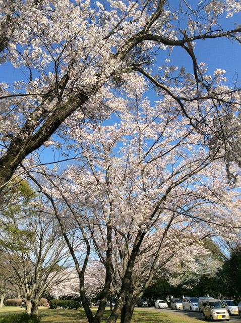 千葉平和公園(公営墓地)5