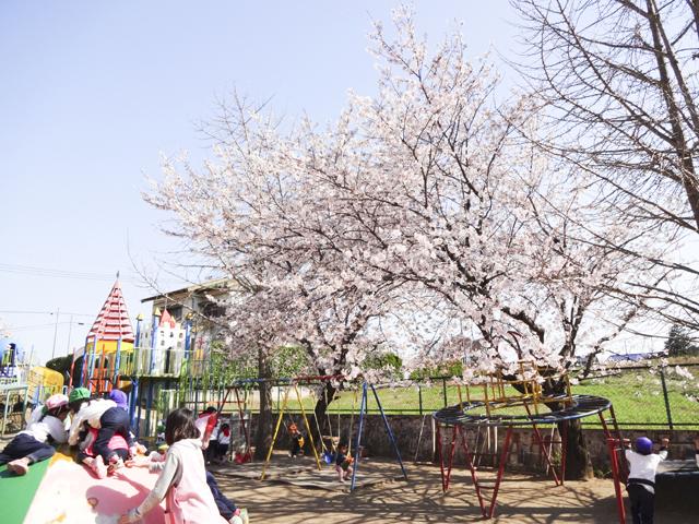 バンビ幼稚園6