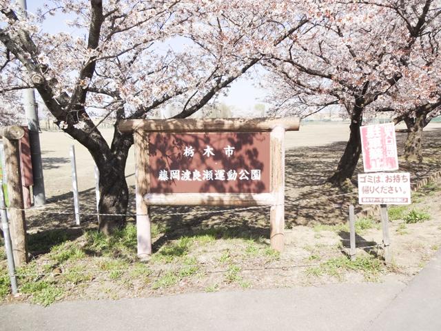 渡良瀬運動公園1