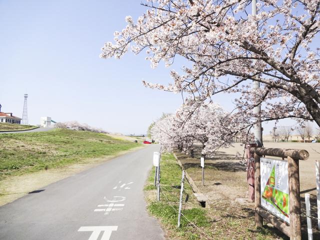 渡良瀬運動公園2
