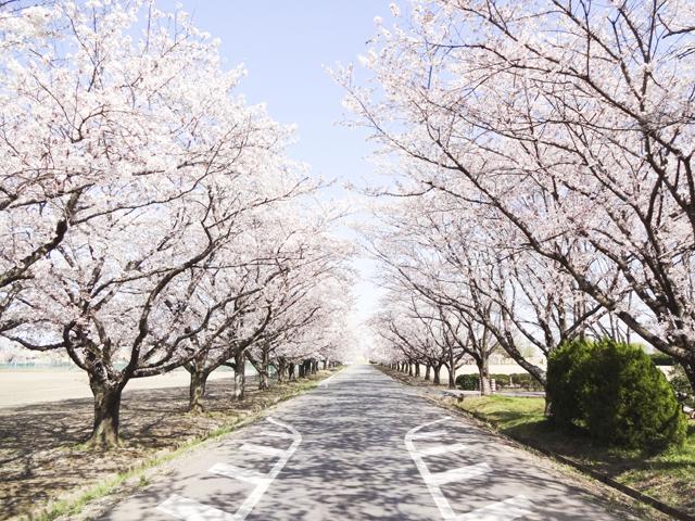 渡良瀬運動公園4