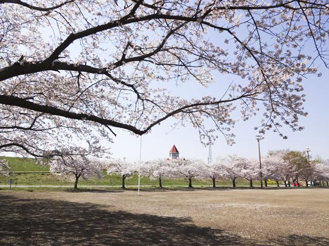 渡良瀬運動公園6