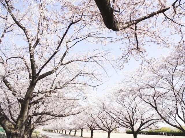 渡良瀬運動公園7