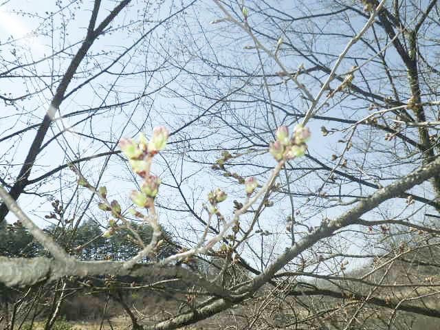 四賀村ビューティフルパーク(菅ノ田公園)3
