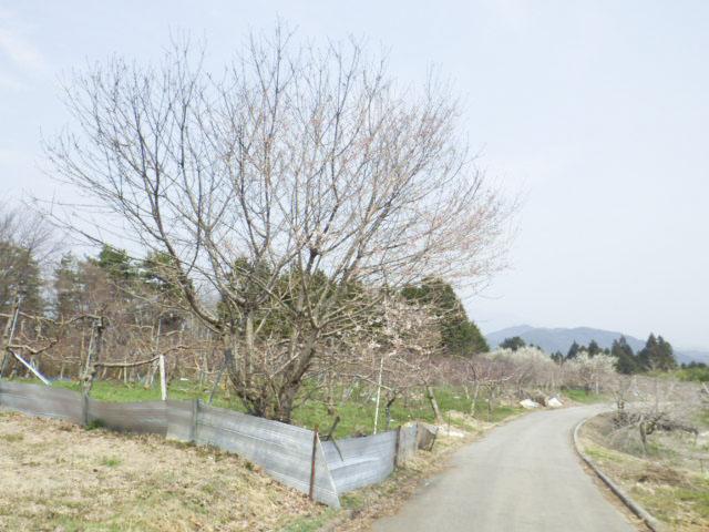 極楽峠街道1