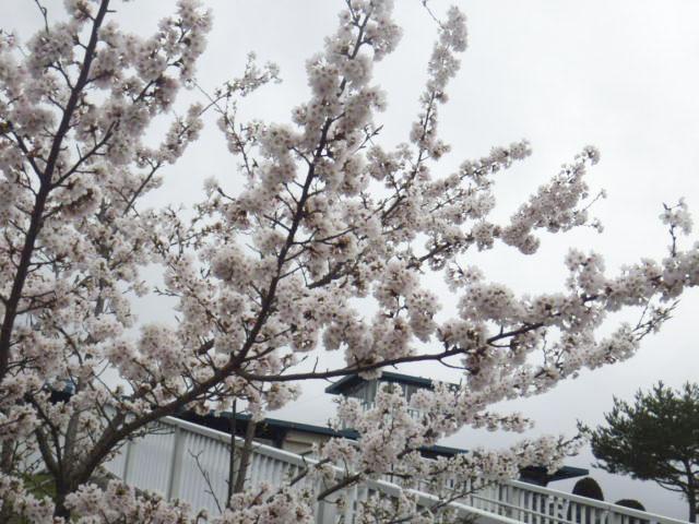道の駅 小坂田公園3