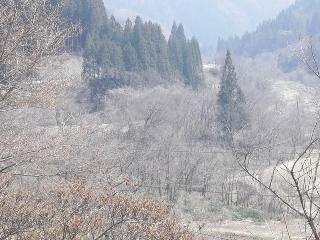 林道 岩井堂峠沿線1