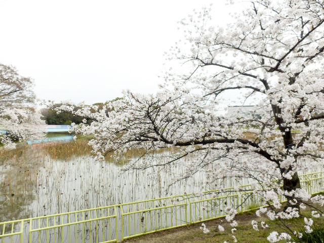 大阪市立 長居植物園1