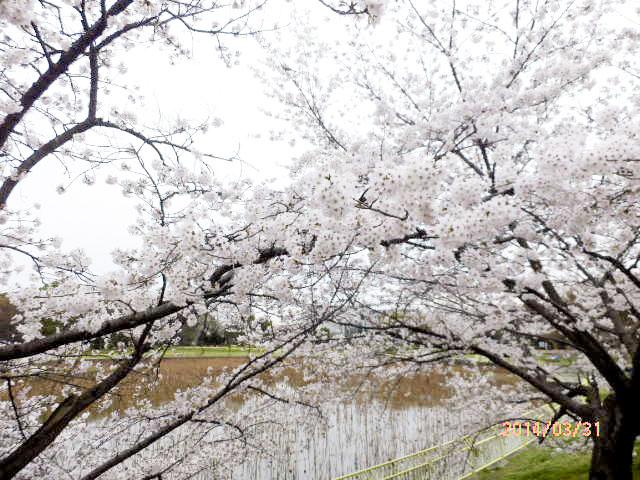 大阪市立 長居植物園10