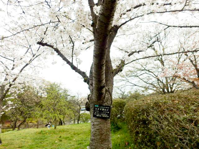 大阪市立 長居植物園4