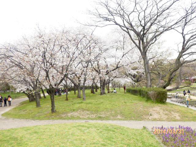 大阪市立 長居植物園7