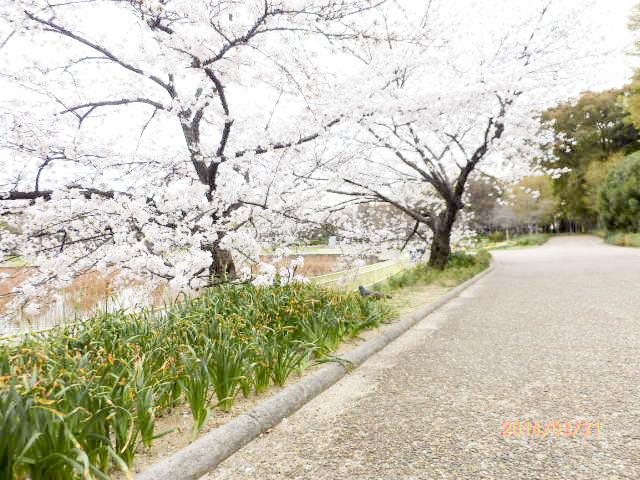 大阪市立 長居植物園8