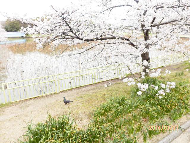 大阪市立 長居植物園9