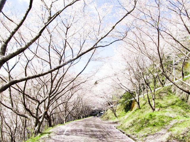 嶋之瀬ダム周辺3
