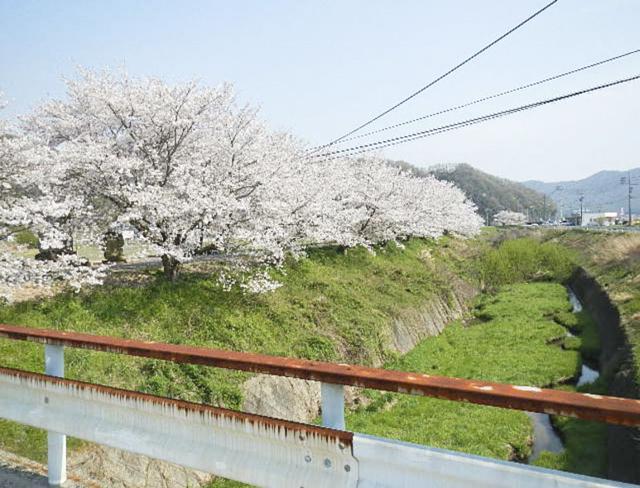 矢掛町道 沿道1