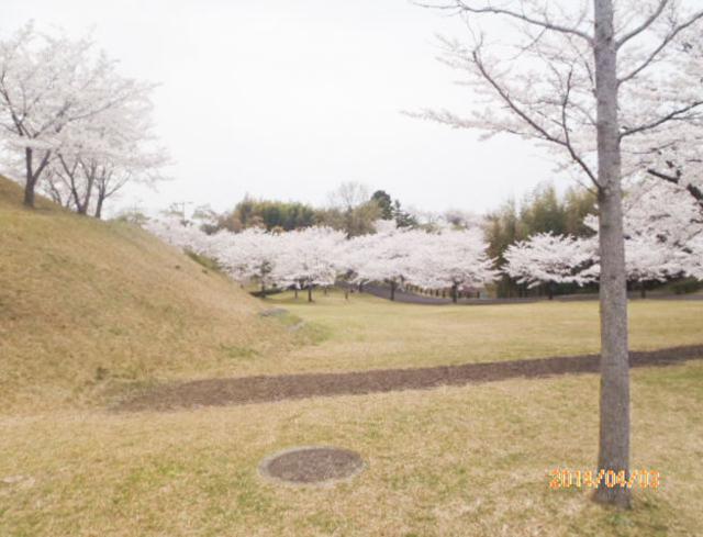 綾上町瀬戸内フラワーセンター周辺2
