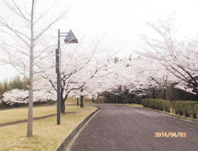 綾上町瀬戸内フラワーセンター周辺3