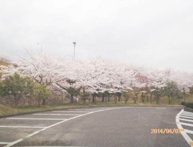 綾上町瀬戸内フラワーセンター周辺4