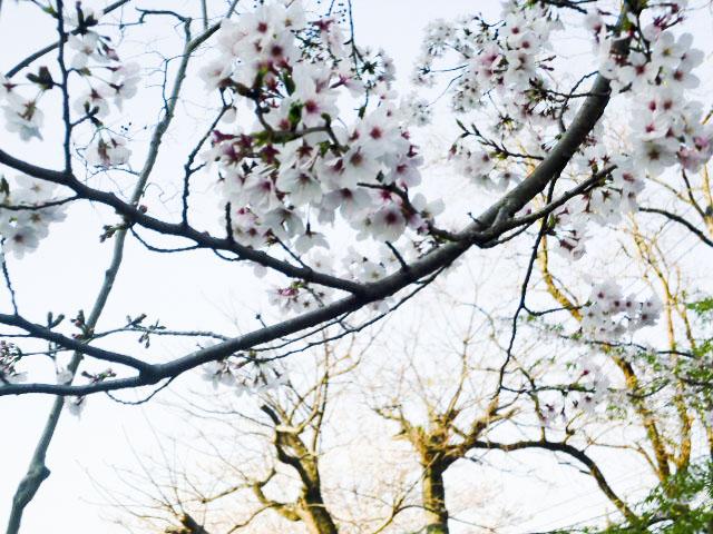 宮崎県農協会館10